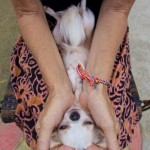 Animal Reiki for sick and traumatized animals